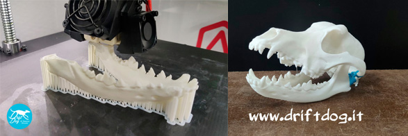 DriftDog – Orthopedic Aids for Animals Made Possible Thanks to 3D Printing
